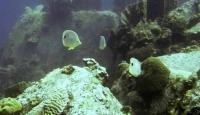 Fish Scape