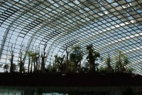 A Forest Under the Dome