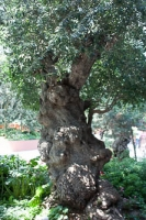 A Knarly Tree